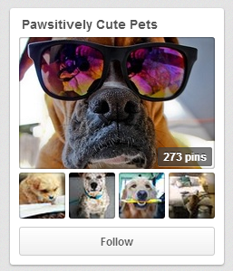 Petplan - a Pinterest Success Story
