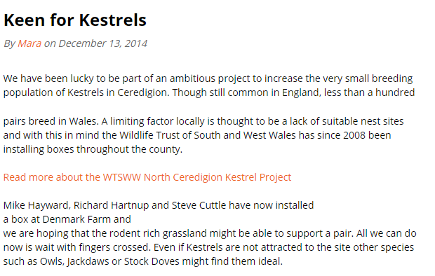 Kestrels_blog